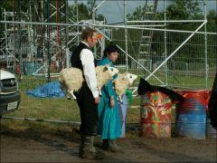 Sheep worriers