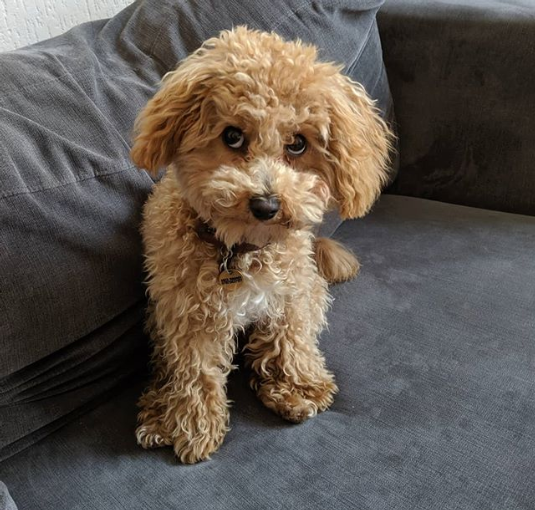 """Screenshot_2019-05-22 Milo Dogson on Instagram """"Completely innocent of all charges ? #happyfriday #fridayfeeling #fridayim[...].png"""
