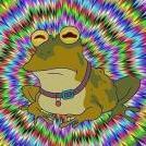 Amnesic_Toad