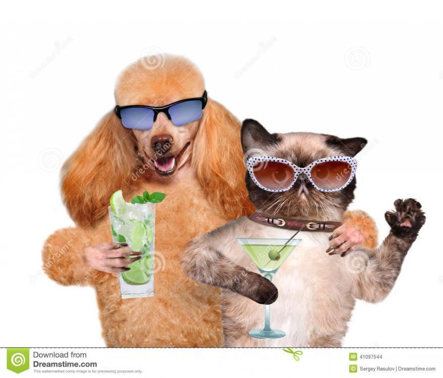 dog-cat-vacation-beach-41097544.jpg