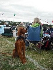 around the festival site (dogs)