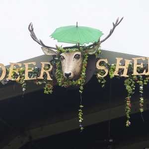 Deer Shed Festival postponed until 2021